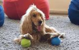 10 manieren om uw hond te vermaken wanneer u niet thuis bent