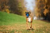 Barx Busyball Review - Is het een nieuw slim hondenspeelgoed in 2021?